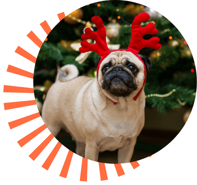 Dog with reindeer hat